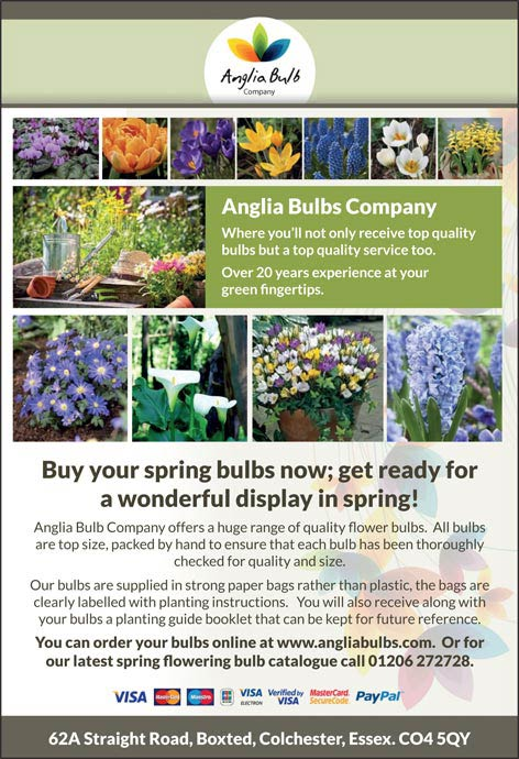 Anglia garden bulbs - Essex