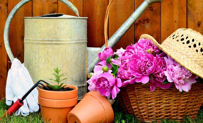 suppliers of garden quality bulbs