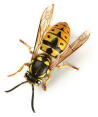 Southern Pest Control / Horsham Pest Control
