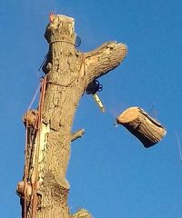Ashwood Tree Surgery